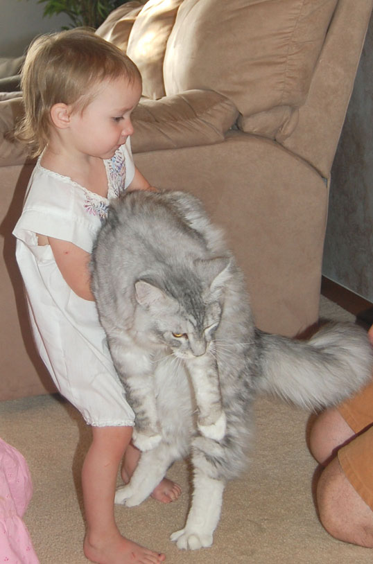 3 year old with Maine Coon Kitten Coonplay Maine Coon Cats and Kittens of Colorado