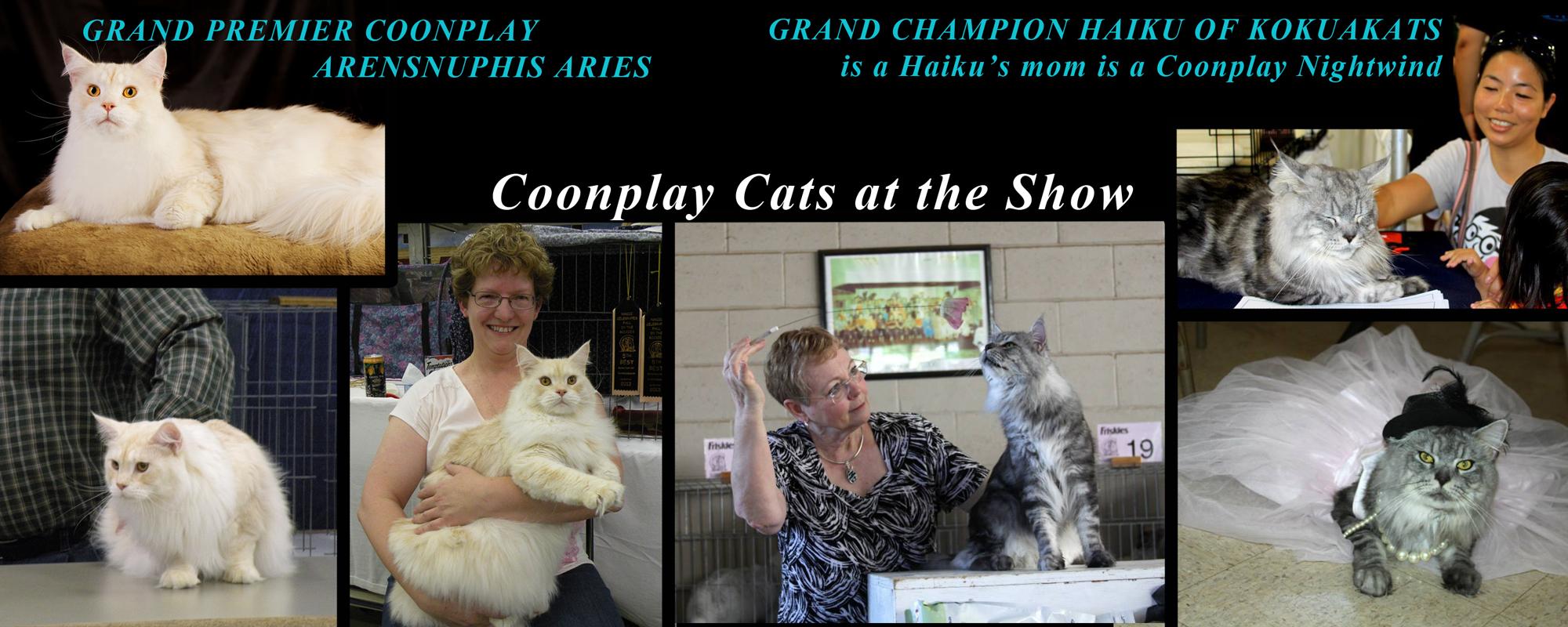 Show Cats of Colorado
