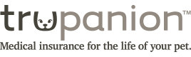 Coonplay | Maine Coon Breeder in Colorado | Colorado Maine Coons